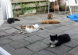 De katten