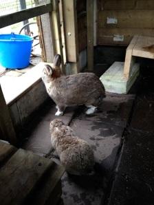 De konijnen