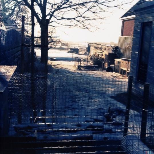 Winter in Schermer 3