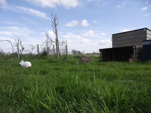 Het koninklijke optrekje van de konijnen Griepje & Groningen