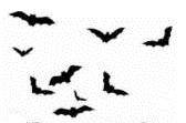Icon 15 - Bats