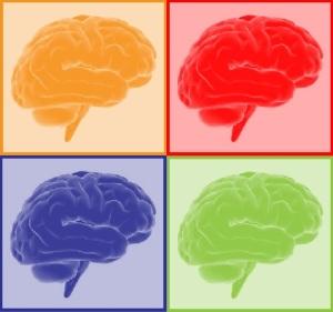 Effectief werken en de hersenen