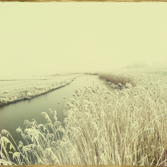 winter-in-de-schermerpolder-4